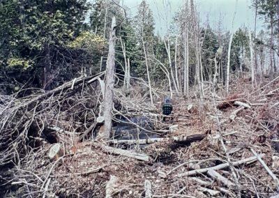 Forêt - Aménagement 3