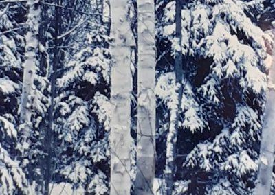 Forêt - Hiver 2