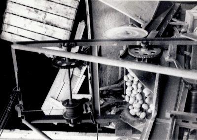 Projet pommes de terre - Récolte